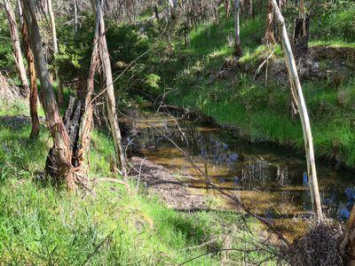 725 REEDY CREEK ROAD, Reedy Creek