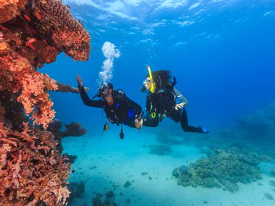 Mobile Scuba Diving School and Tour Operator Business For Sale