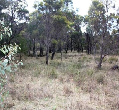 Lot 24 Tilly Willy Road, Coolah