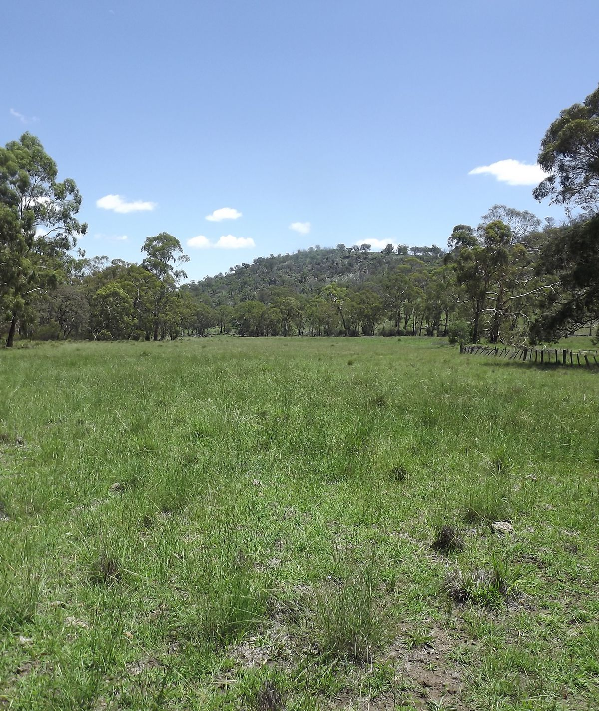 Lot 20, Tent Hill Road , Emmaville