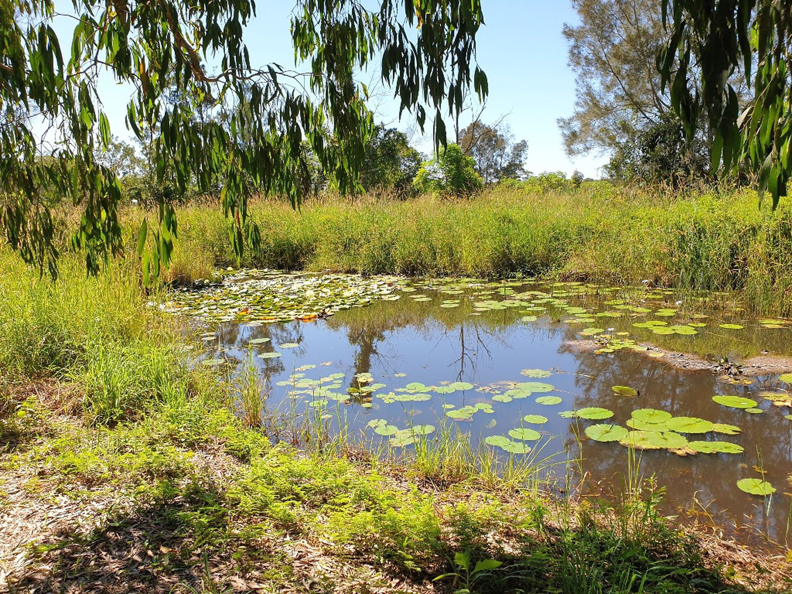 11 Brushbox Drive, Mullumbimby Creek