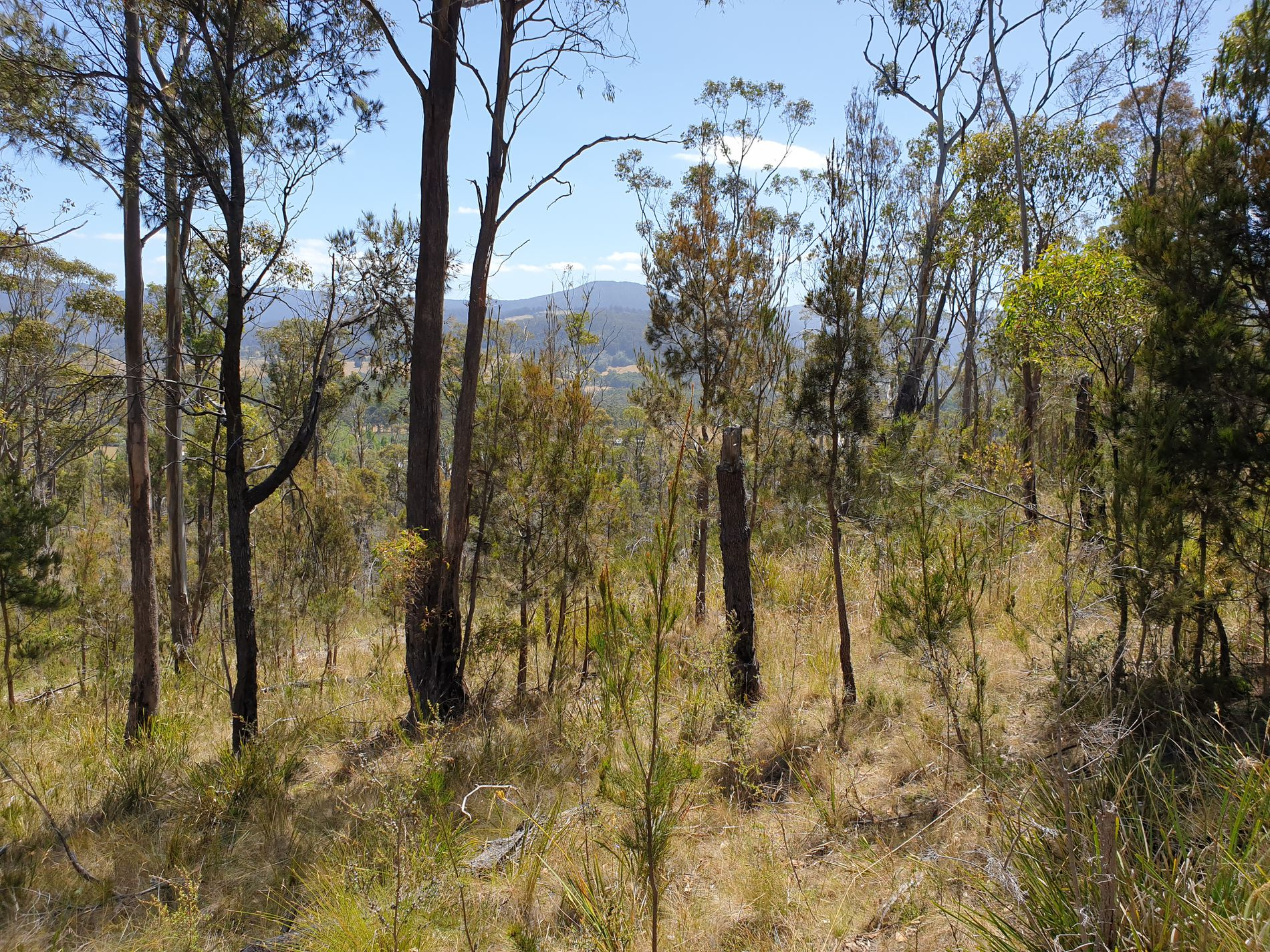 Lot 26 Grovenor Rise, Grove