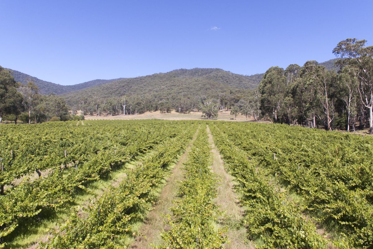You've Dreamt about a Vineyard- Now here it is !