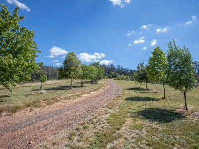 3852 Jingellic Road, Lankeys Creek