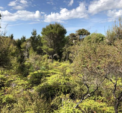 Lot 2 Glendale Heights, , Waipapa