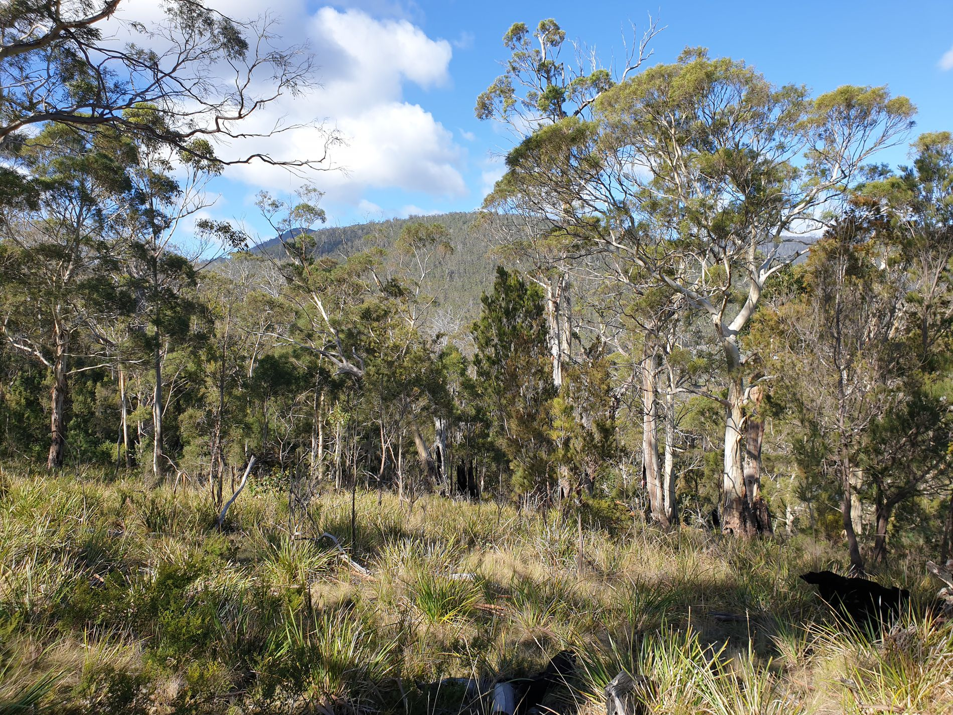 Lot 3 Turn Creek Road, Grove