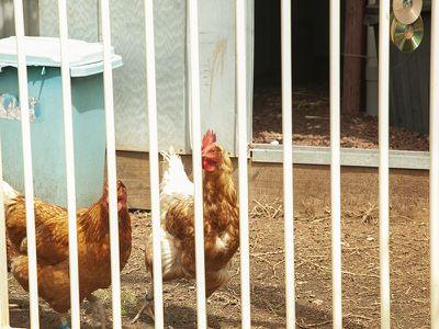 43 BIRDWOOD STREET, Corowa