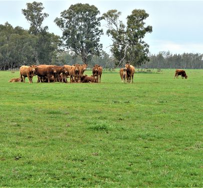 Lot 4 Woolshed Road, Tocumwal