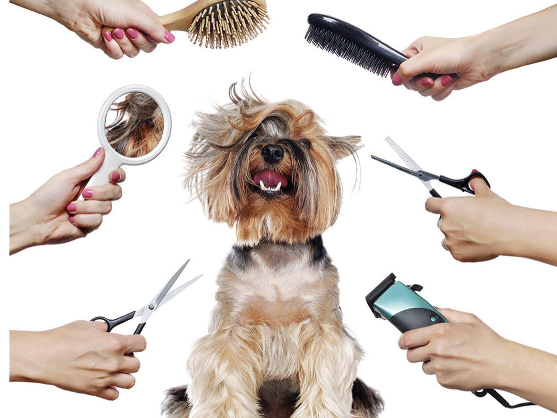 Pet Grooming Salon in Bexley