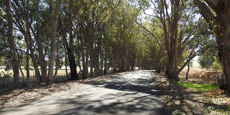Long Gully Road, Violet Town