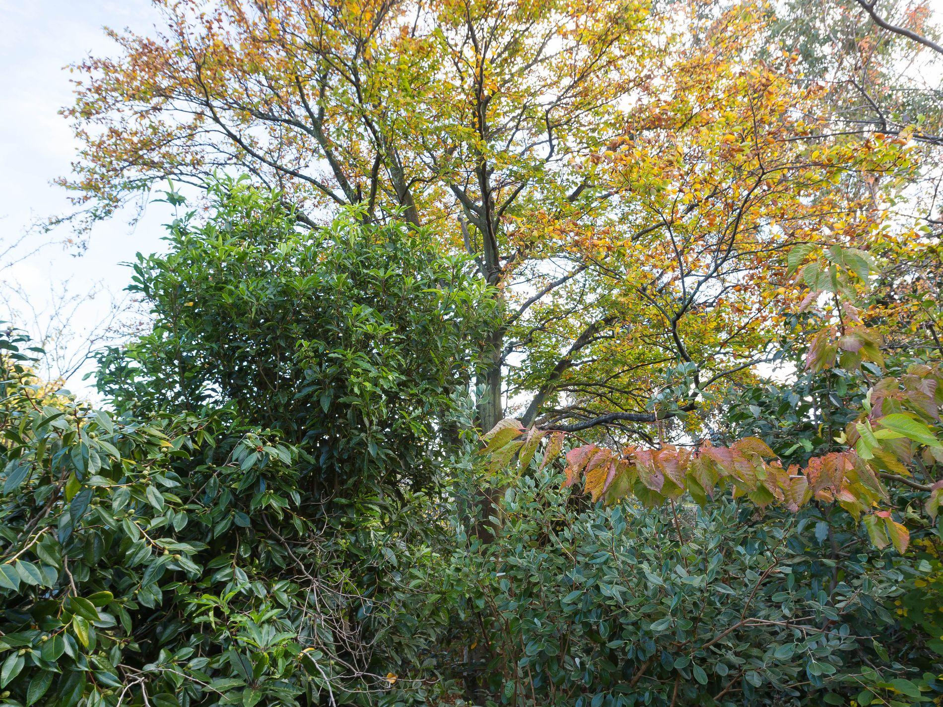 7 Hazel Court, Ulverstone