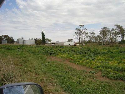 Cowriga Road, Orange