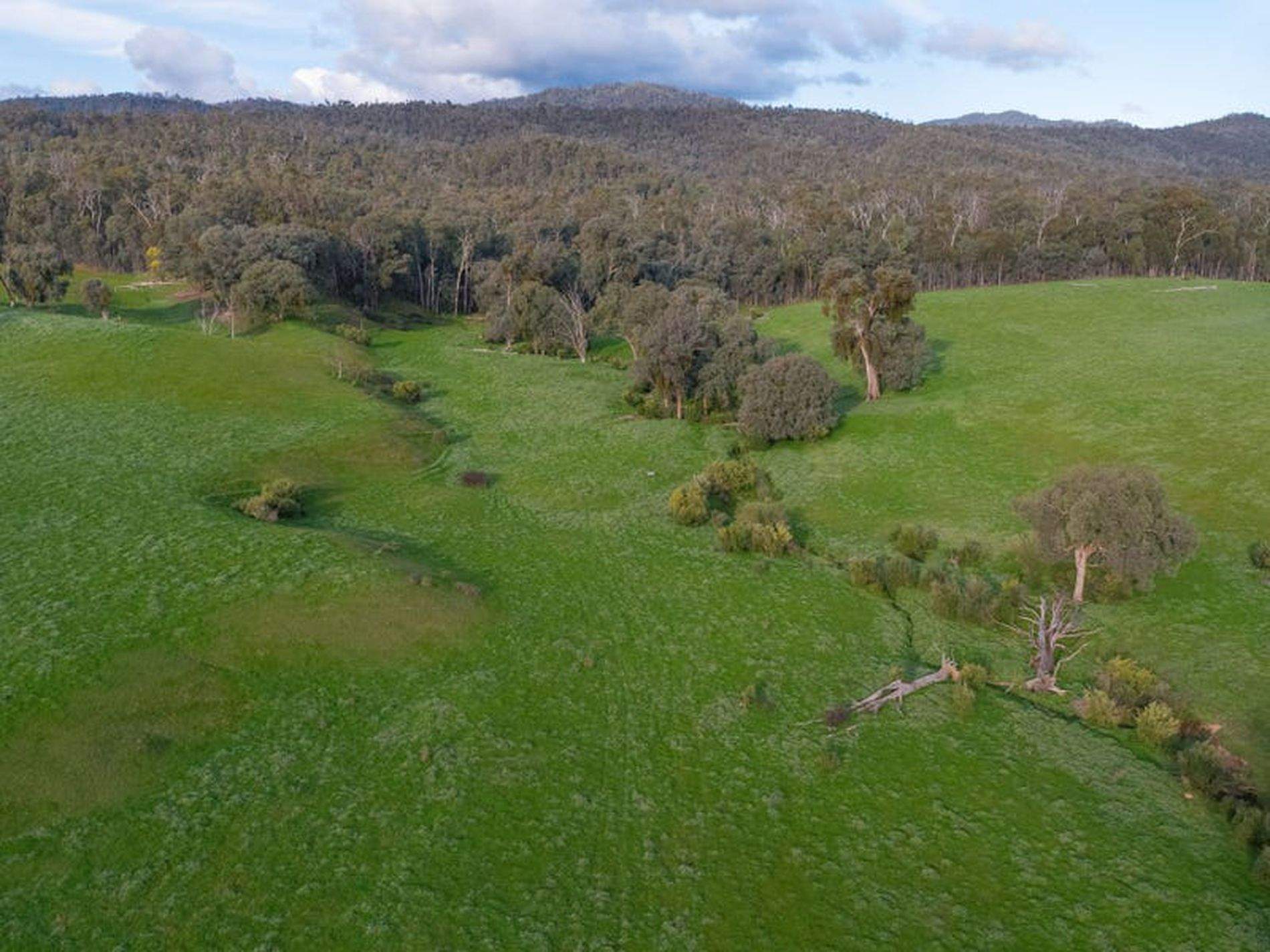 Coopers Track, King Valley