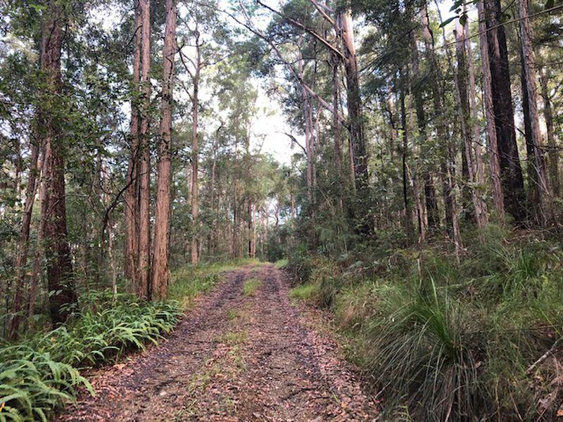 Beautiful Bushland, Easterly Aspect
