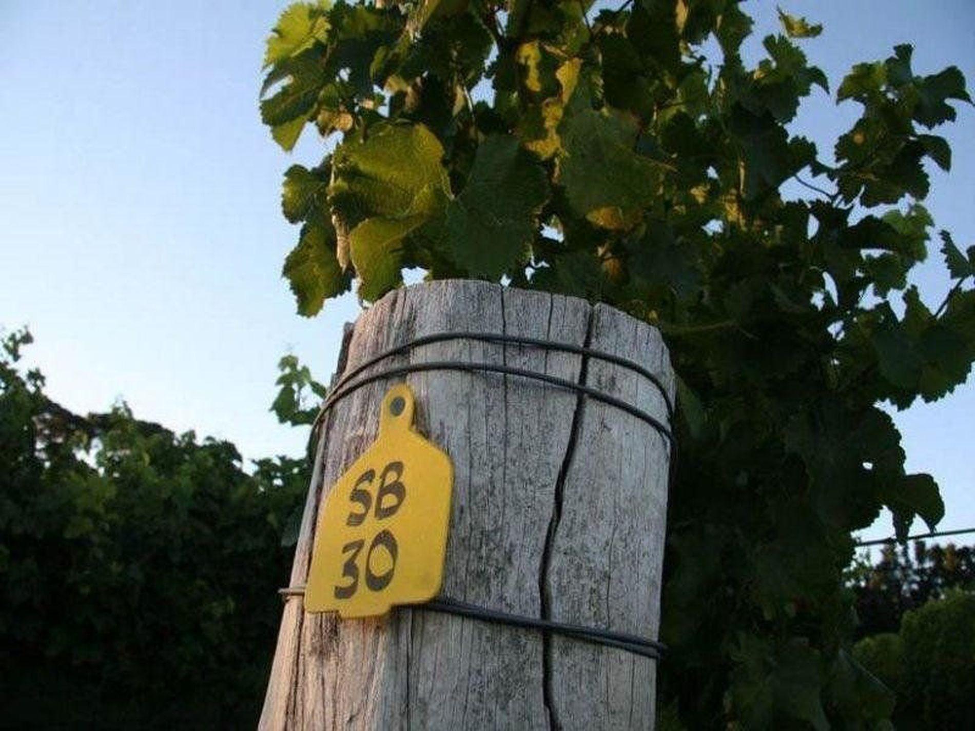 790 Pinnacle Road, Orange